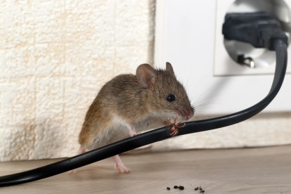 Pest Control in Petts Wood, St Mary Cray, BR5. Call Now! 020 8166 9746