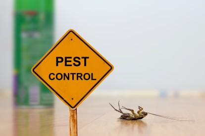 Pest Contol in Petts Wood, St Mary Cray, BR5. Call Now 020 8166 9746